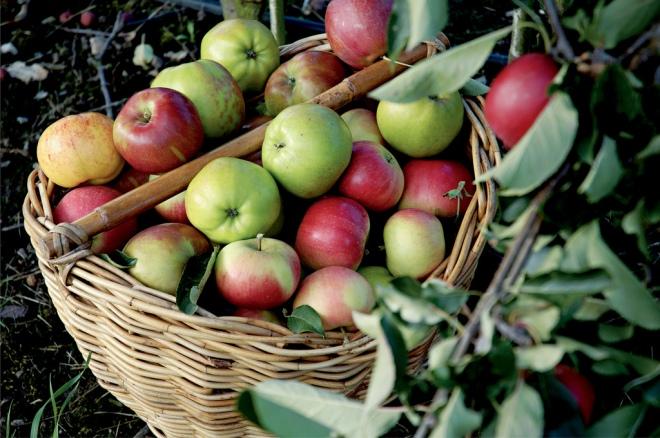 Image result for apples ringdens
