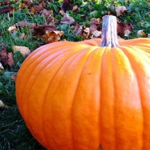 Orange_Pumpkin-500x500