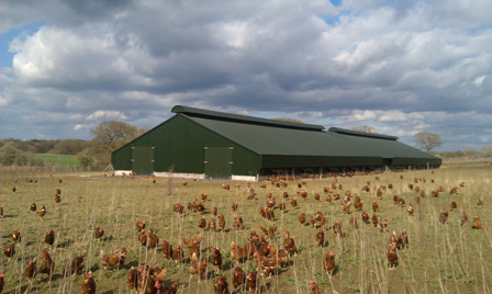 springles-farm-3