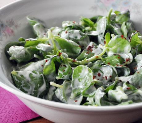 yogurtlu-semizotu-salatasi-tarifi